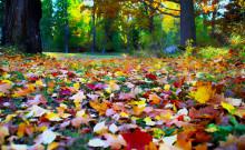 _october_garden